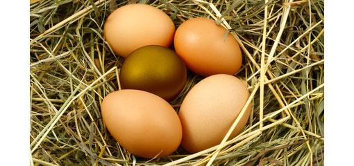 golden egg among a nest of eggs