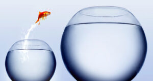 gold fish jumping from small bowl to large bowl