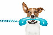 dog holding a blue phone in his mouth