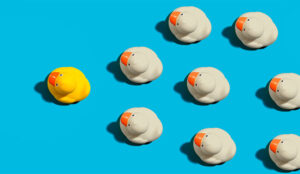 A picture of a duck leading the pack