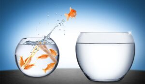 A photo of a fish jumping from a bowl