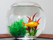 fish-185