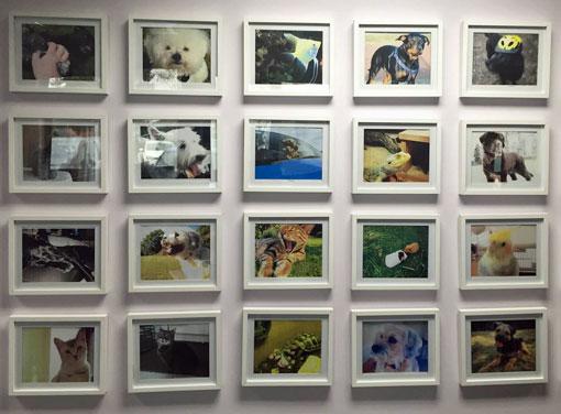 pampered-dog-wall-510