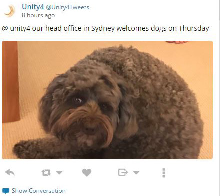 More and more offices are bringing in dogs!