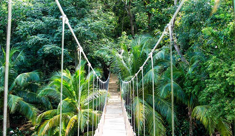 bridge in jungle