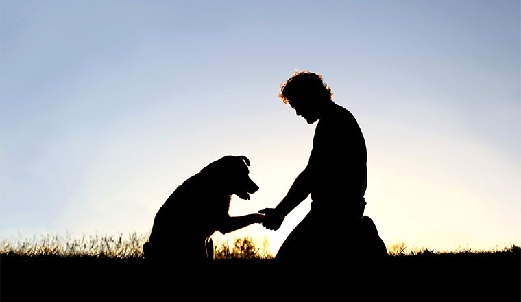 A picture of a silhouette of man shaking hands with his dog