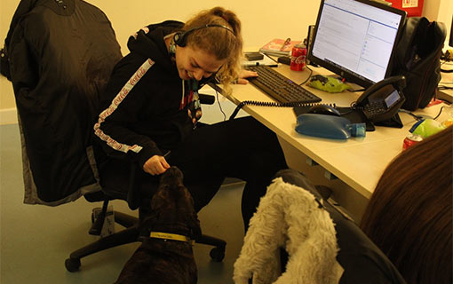 A photo of a call centre agent playing with a dog