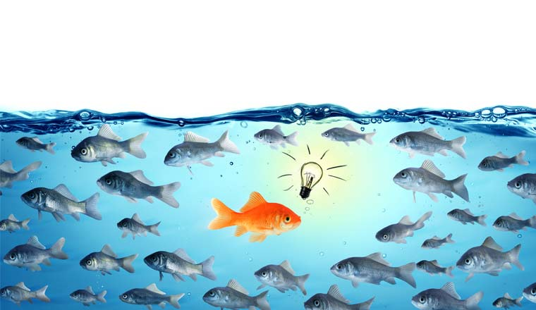 A picture of a gold fish next to a light bulb and surrounded by fish