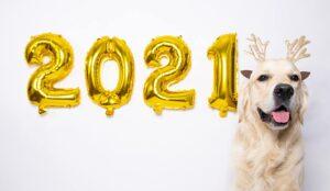 A photo of a dog celebrating 2021