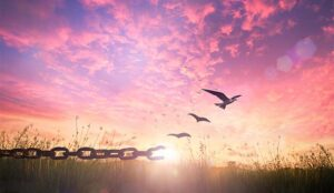 A photo of a chain to birds