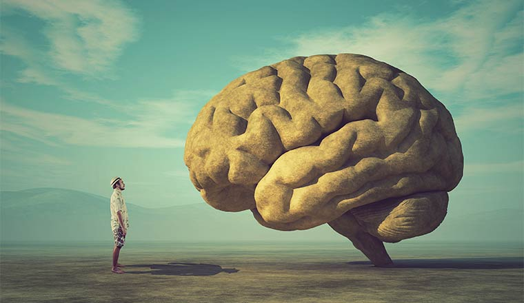 A picture of someone staring at a big brain