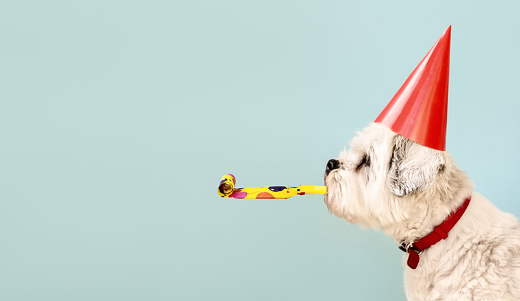 A photo of a dog celebrating in a party hat