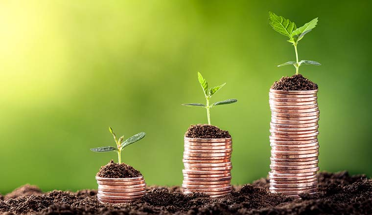 Plants On Three Stacks of Coins