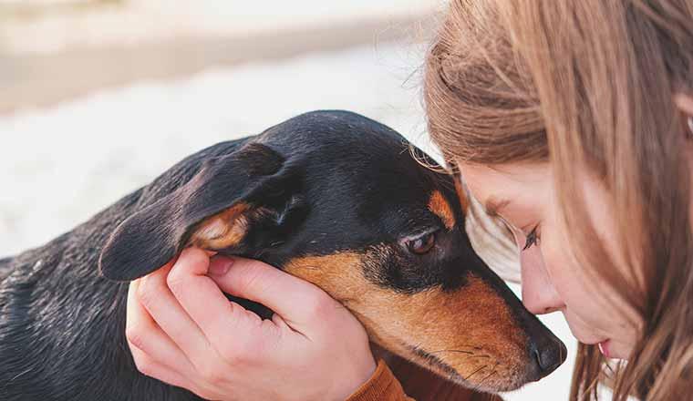 Dog and human sharing empathetic connection