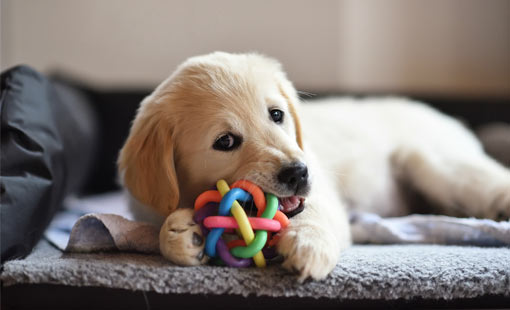 A picture of a puppy chewing a ball