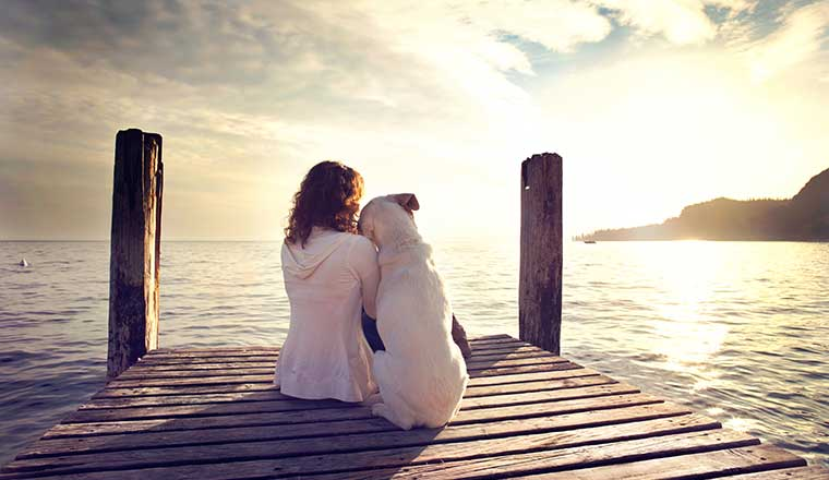 dog rests gently on his master's shoulder while looking the view