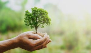 hand holding growing tree